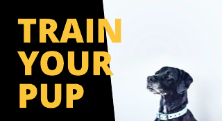 Black and Yellow Dog Training Youtube Channel Art Template