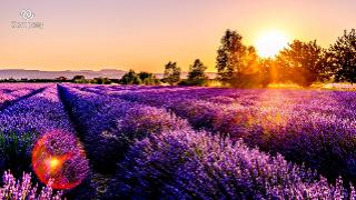 Lavendar Zoom background