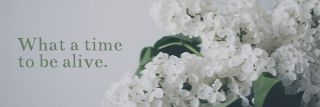 Quote Twitter Header Template